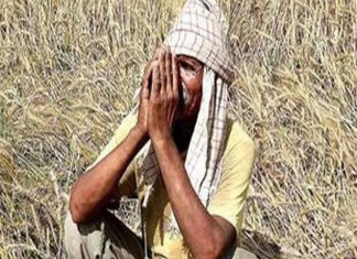 Gujarat Govt Declare Relief Package of Rs 700 Crore For Farmers
