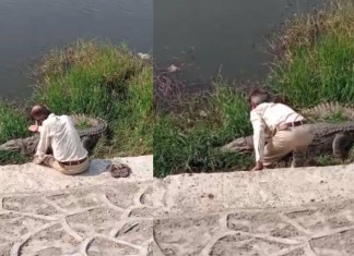 50-yr-old in Vadodara booked for petting crocodile after video goes viral